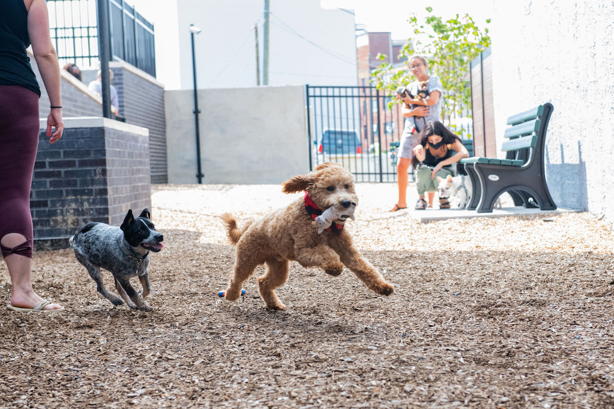 Dogs playing in Dwell 2nd Street dog park